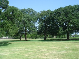 Post Oak Savannah