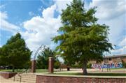 Ace Park